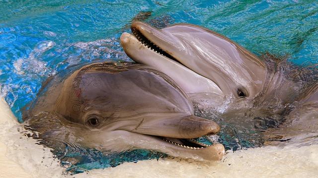 hlavy delfínů