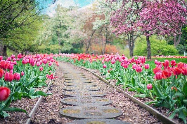 tulipány u cesty