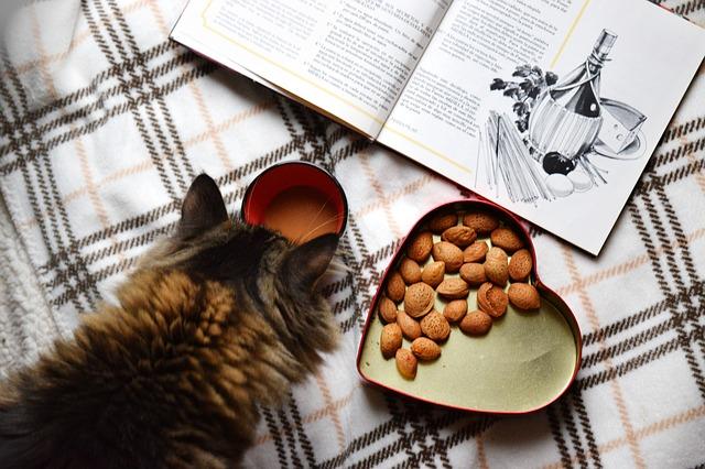 dobrůtky pro kočku