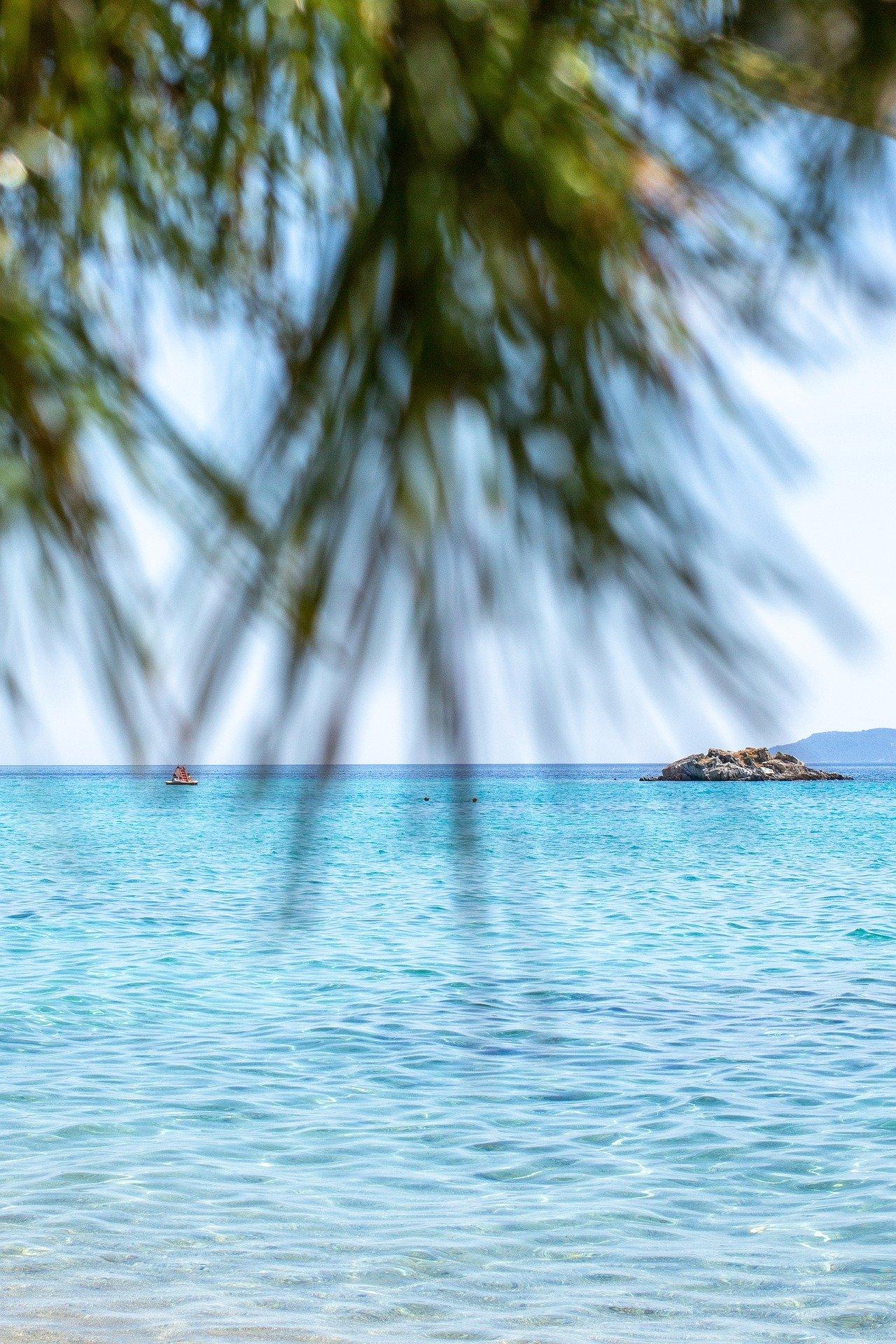 moře a palma