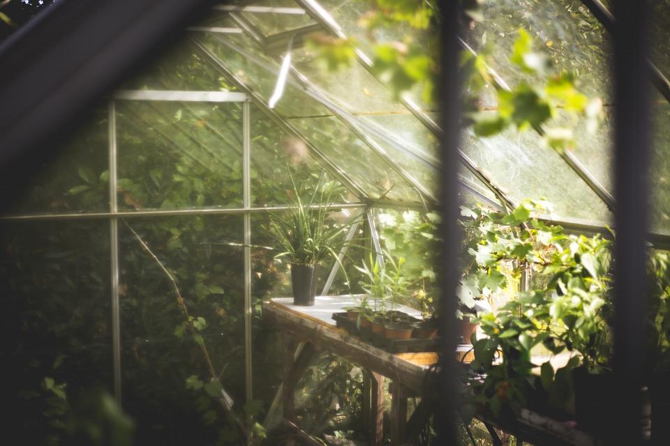 ve skleníku